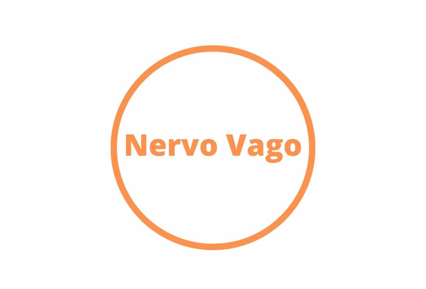 Nervo Vago, piacere di conoscerti!